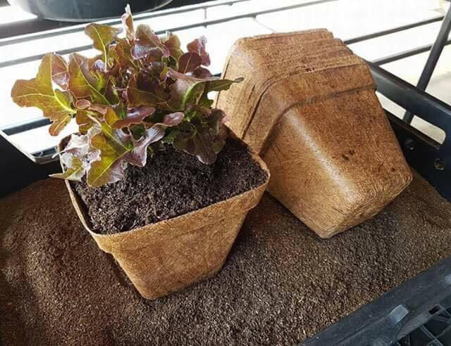 Coir Pots, biodegradable plant pot