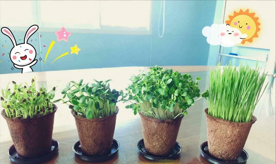 biodegradable herb pots