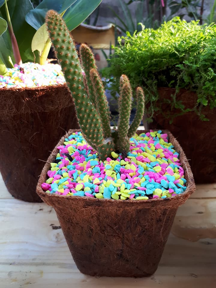 Biodegradable plant pot cactus