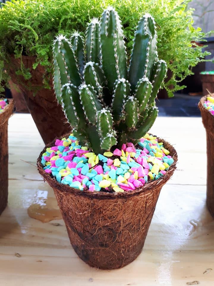 Biodegradable plant pot cactus
