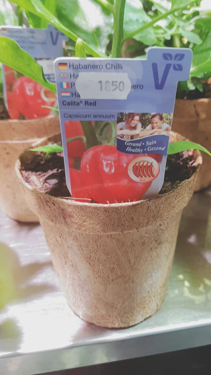 Biodegradable Pots for tomatoes and herbs