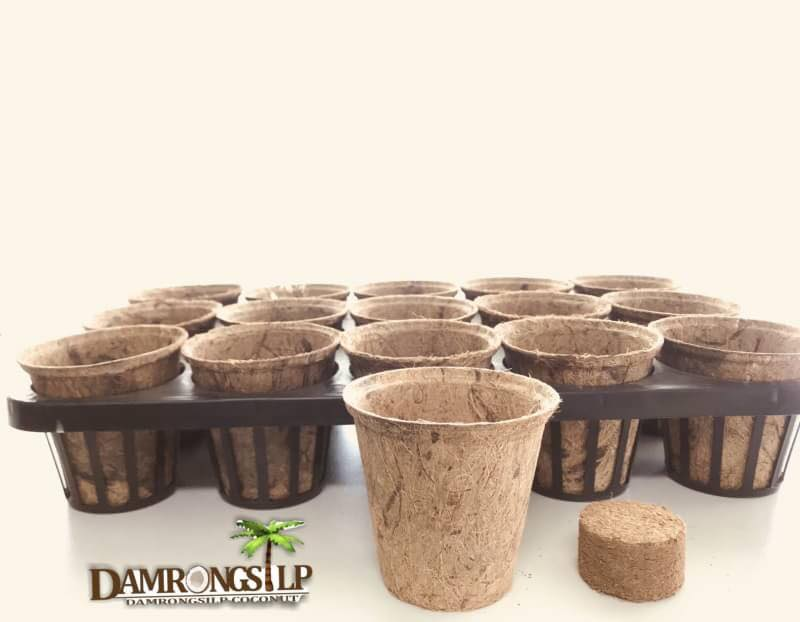 Biodegradable Nursery Pots with Coir tablet and tray