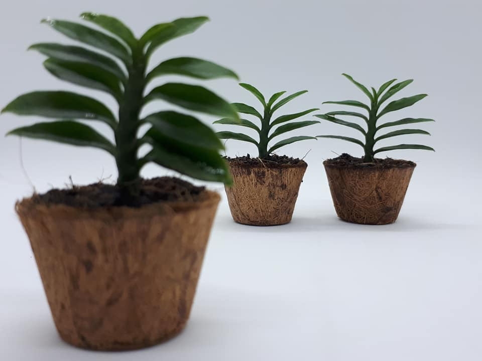 Biodegradable Mini Pots Wholesale