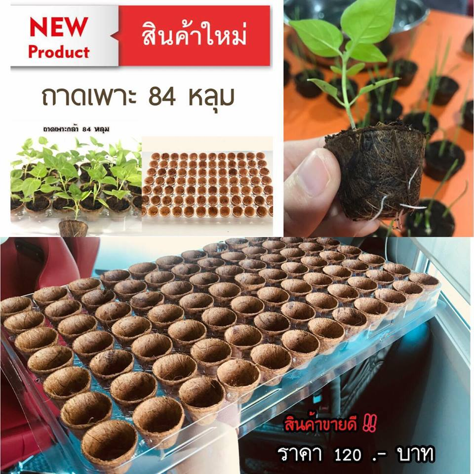 Biodegradable pots with trays wholesale