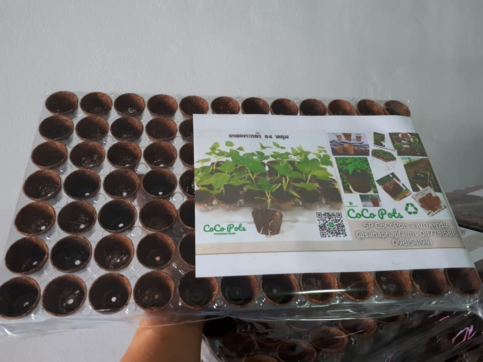 Biodegradable pots for seedlings (In Tray)