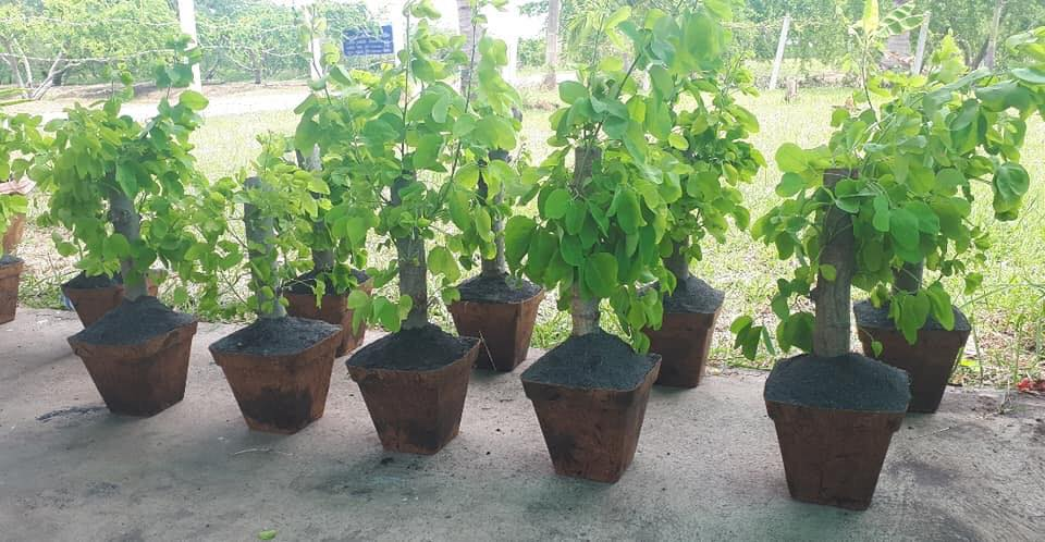 Replace Plastic Tree Pots by Biodegradable Pots