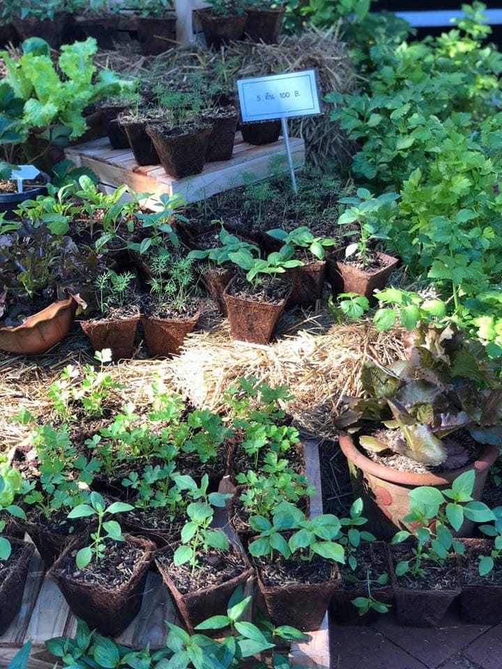 Natural Plant Pots