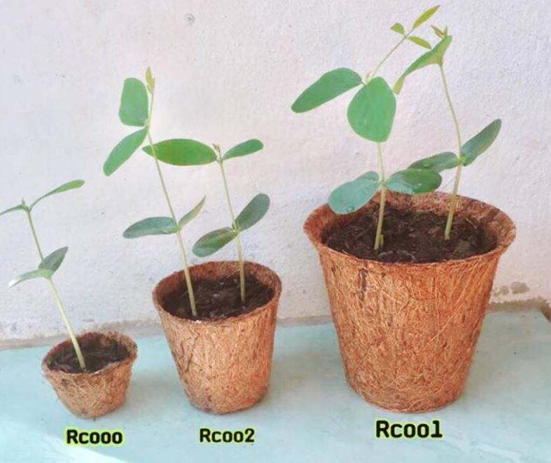 Coconut plant pots
