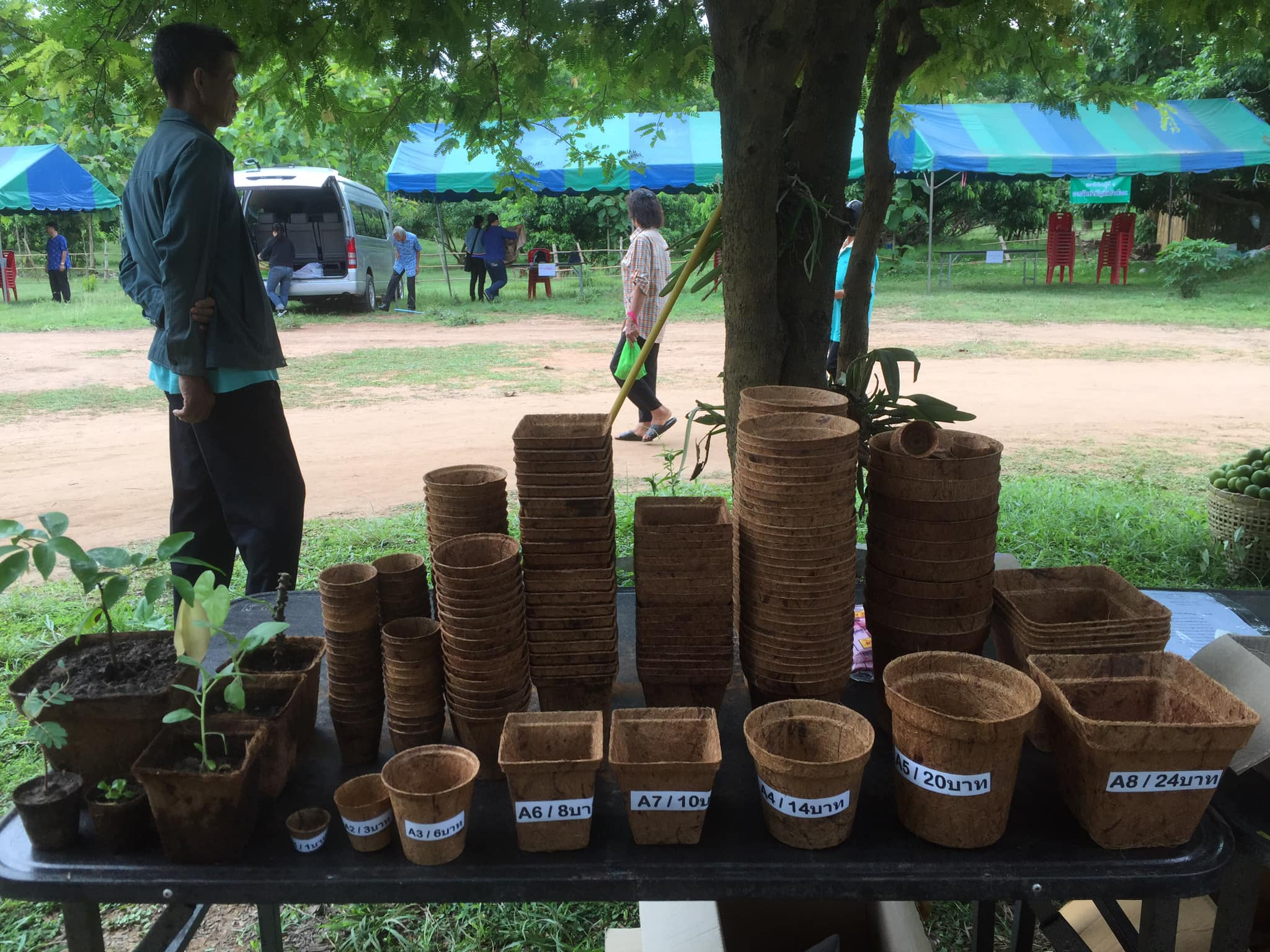 Biodegradable nursery pots