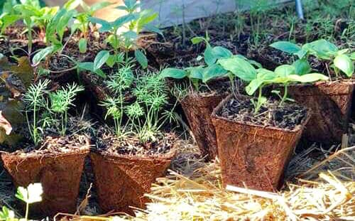 Sustainable and Organic Gardening Pots