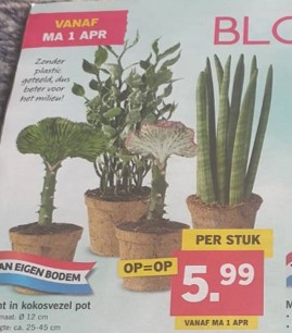 LIDL Germany – Coconut Pot