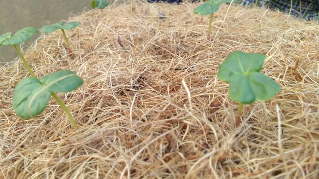 Coconut fiber mat bulk