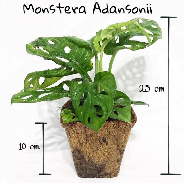Organic Plant Pots