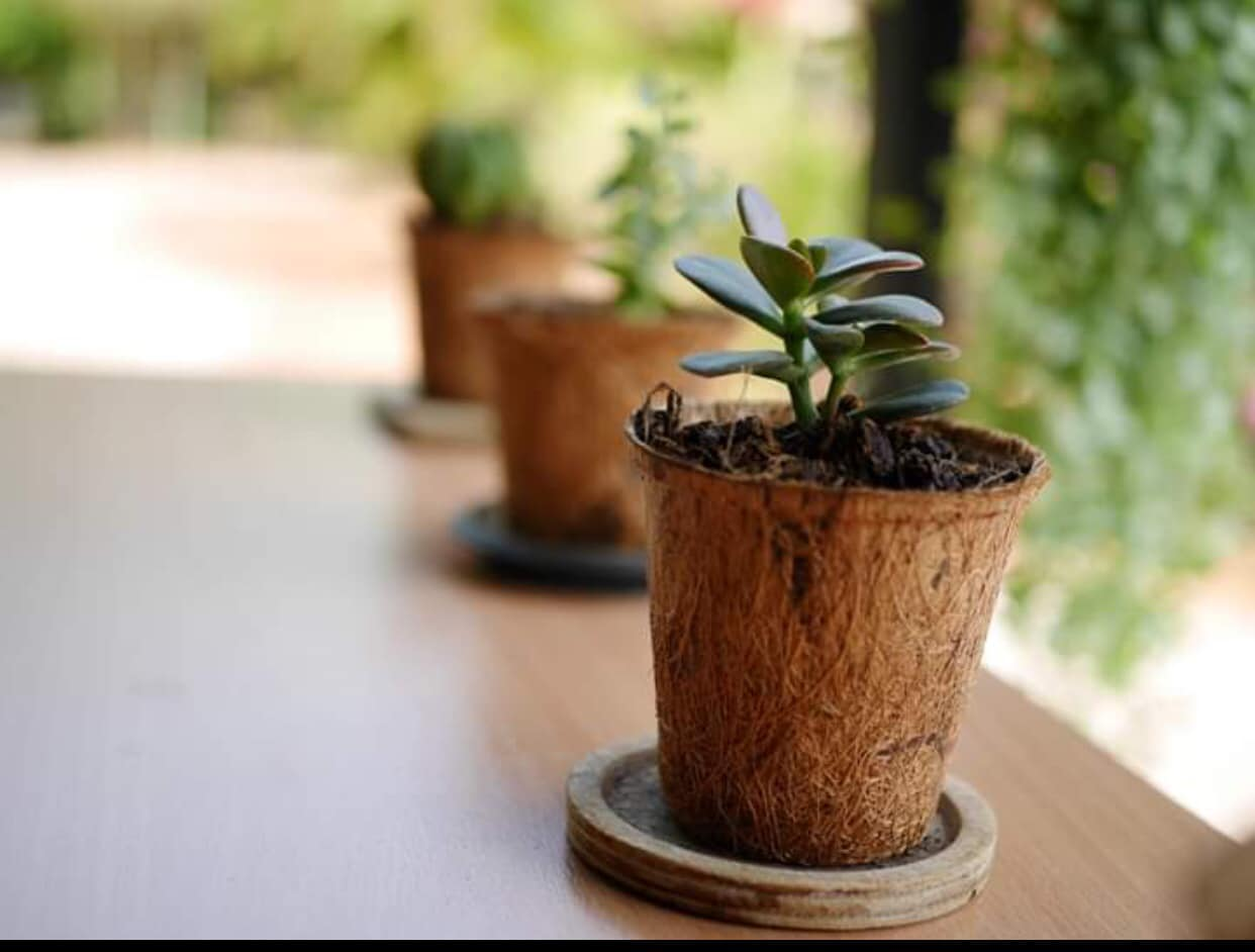 Coir Pots The Natural Gardening