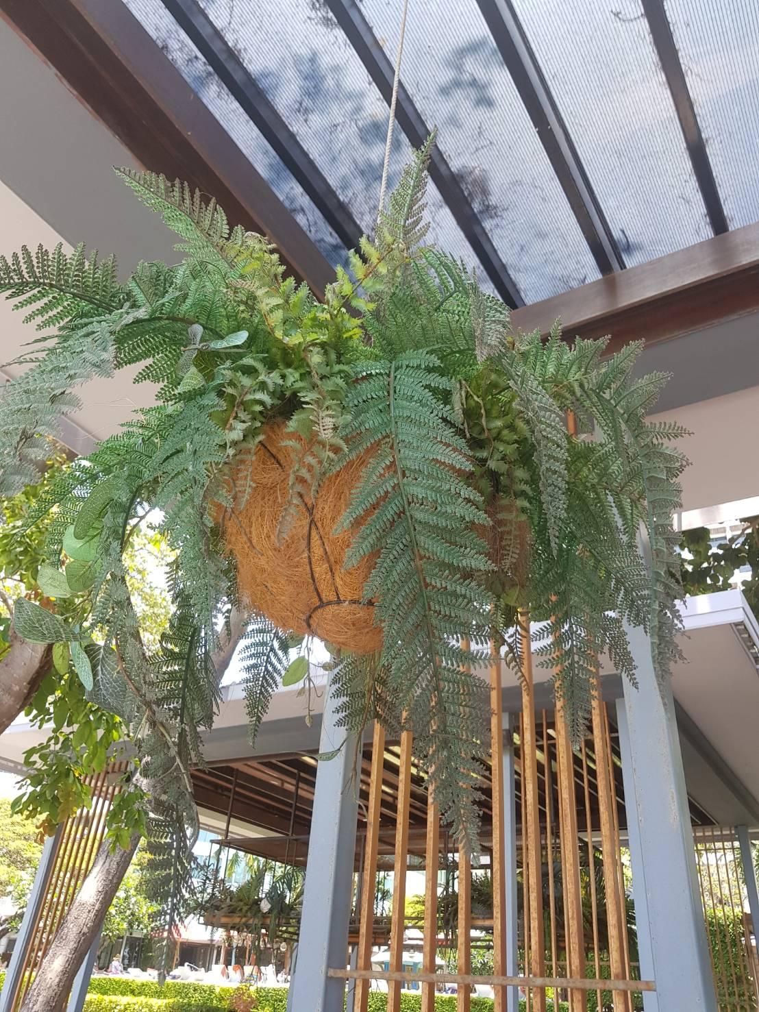 Biodegradable hanging baskets