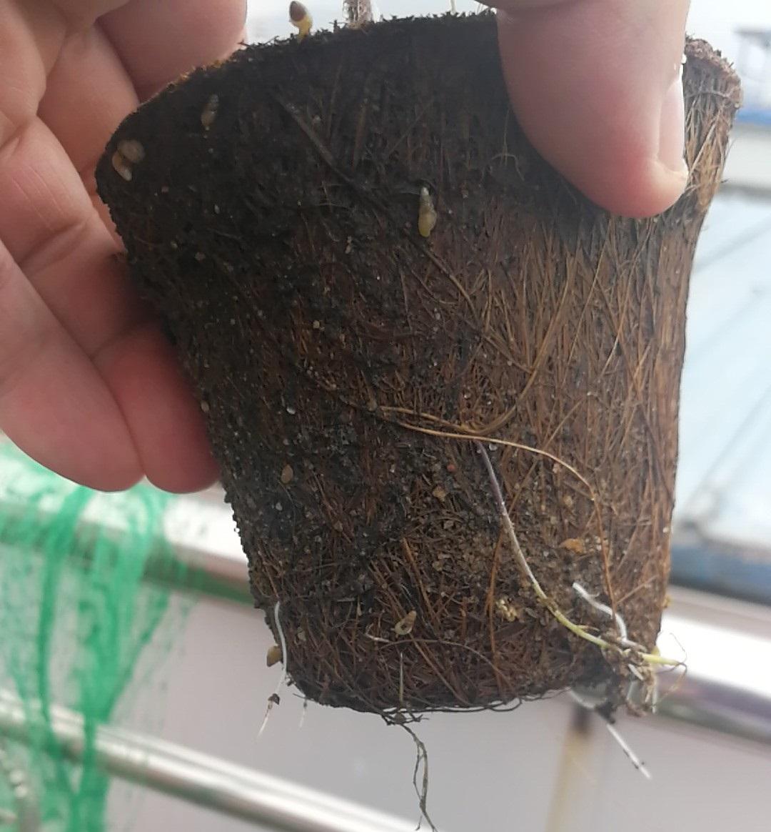 hydroponics pots