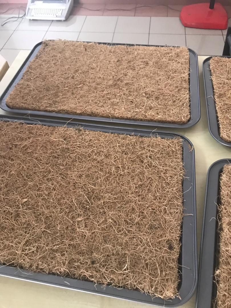 Microgreen Growing mat