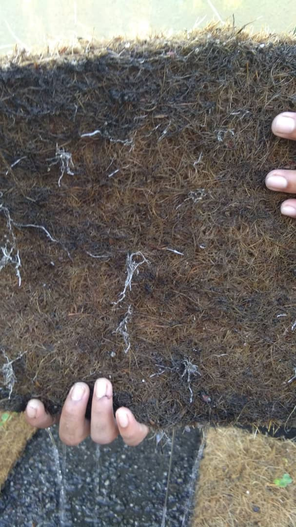 Biodegradable Mat Root Penetration
