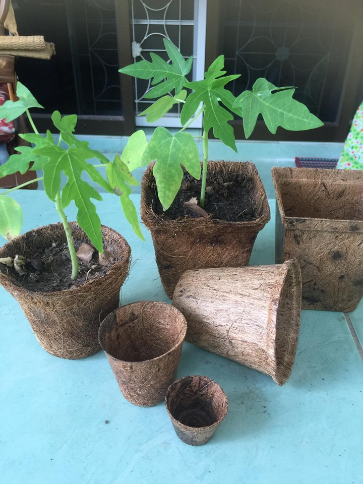 Biodegradable and compostable flower Pots made from coconut fiber.
