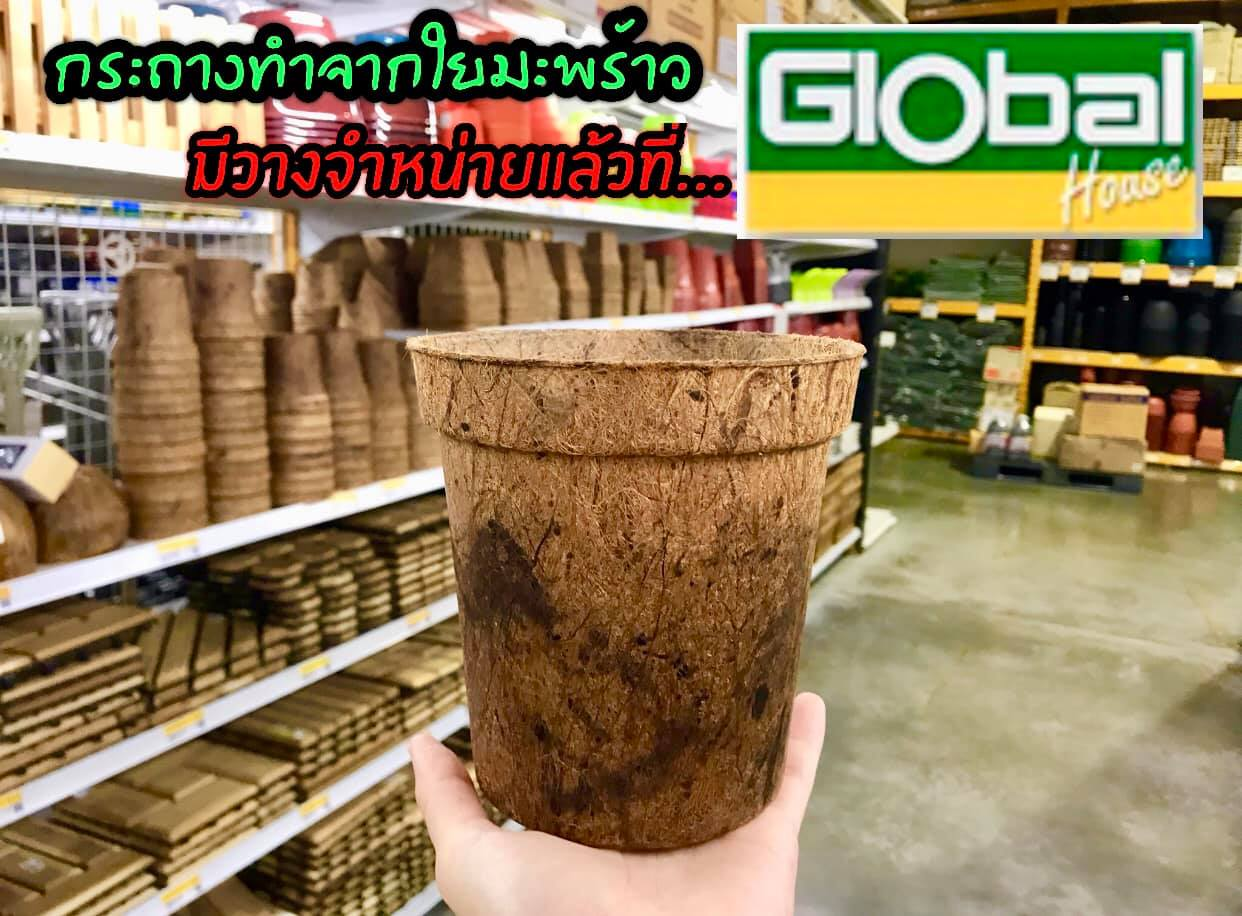 Global House Thailand, Coconut Pots, Coir Pots Biodegradable pots supermarket