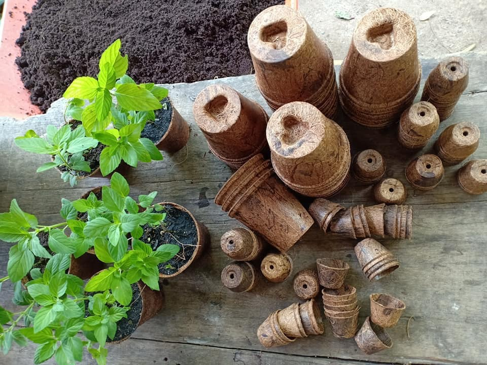 Biodegradable coir herb pots