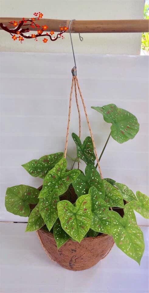 Hanger plant pot