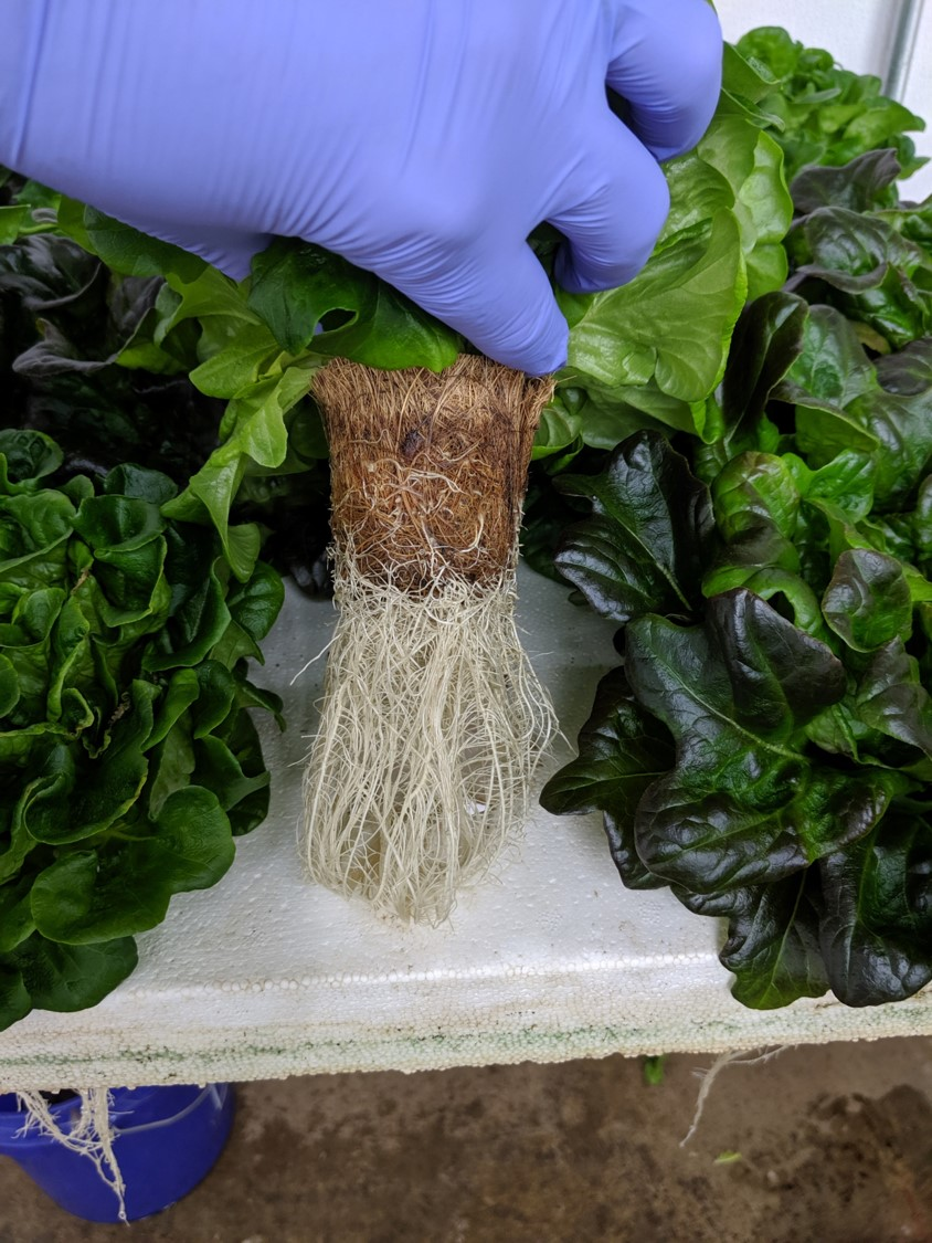 Hydroponics Net Pot; Root Penetration, No Washing required; Reusage as soil of composted Pot