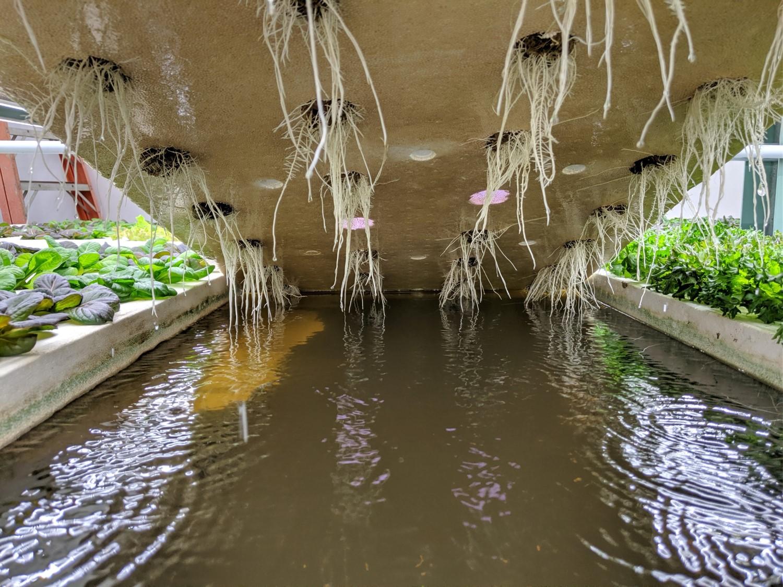 Non plastic hydroponics