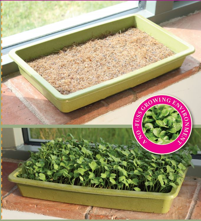 Biodegradable Tray (Bamboo)