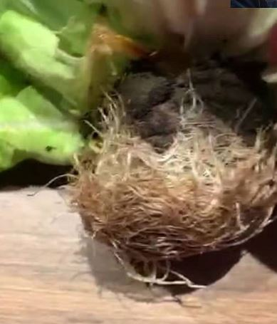 Plant pot transfer