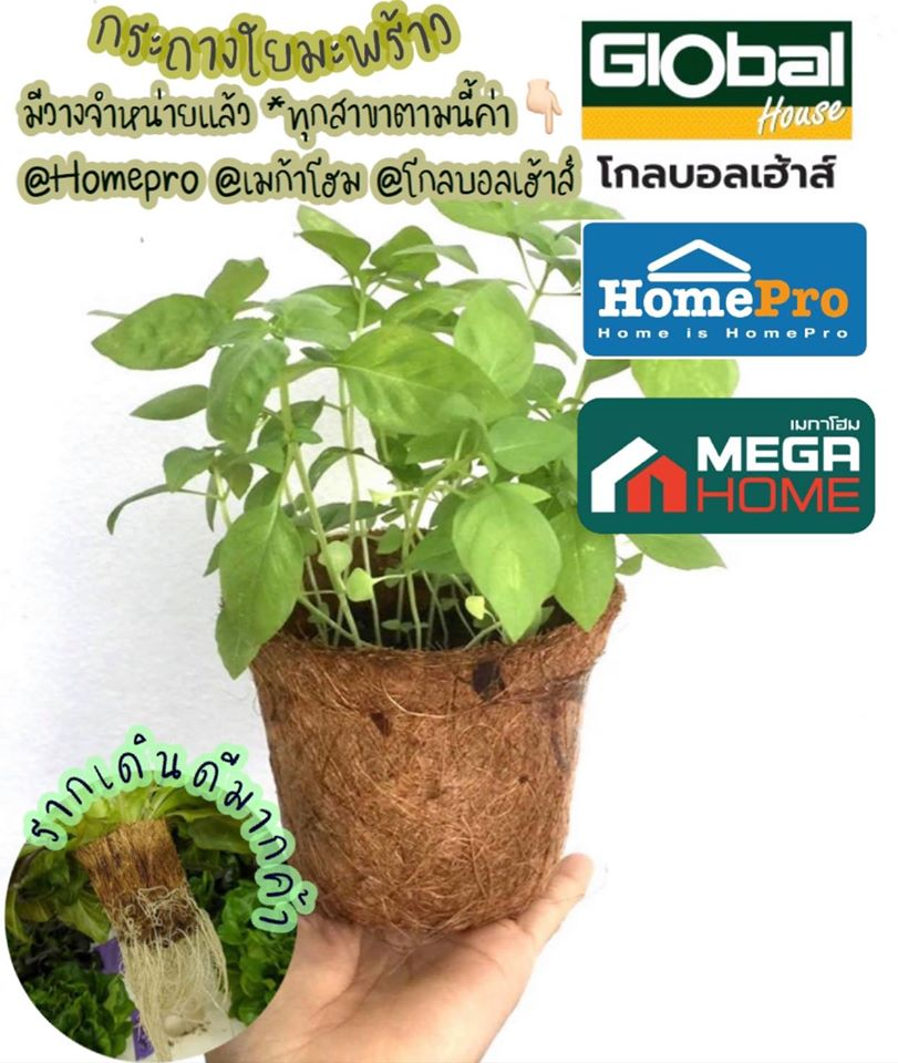 Natural Fiber Biodegradable Flower Pot