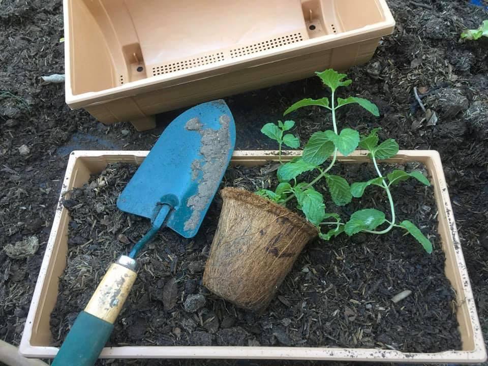 Organic flower pot