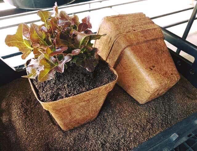 Pots without peat moss