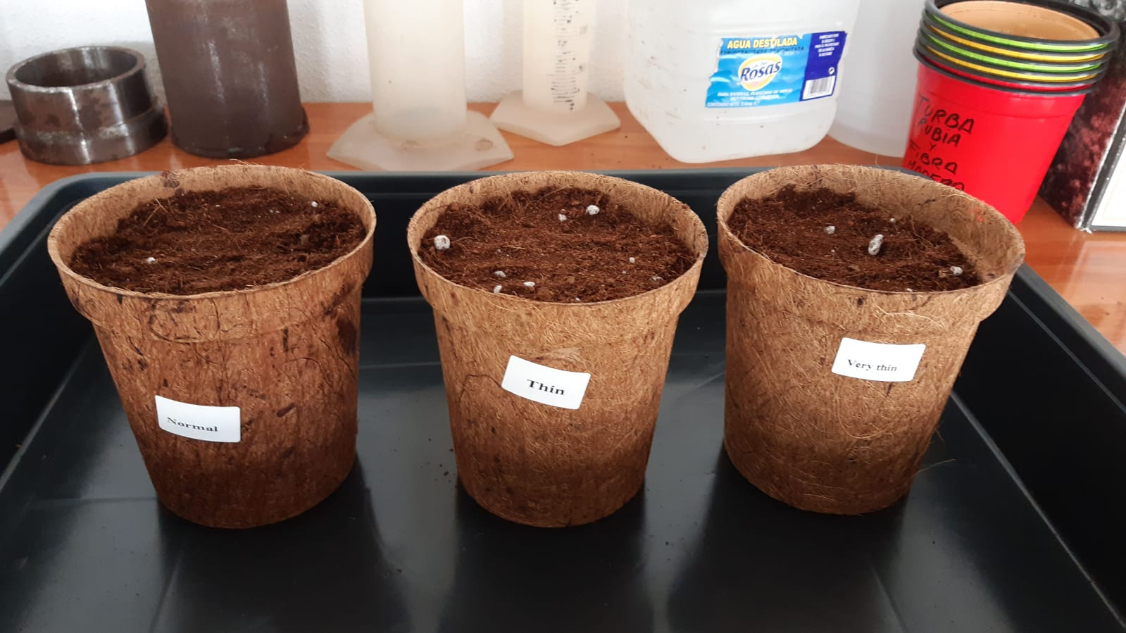 Biodegradable Pots Testing