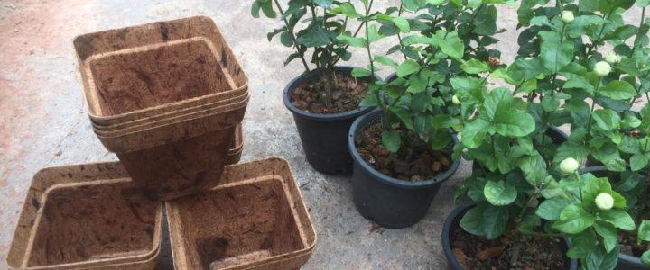 Biodegradable Home Gardening Kit