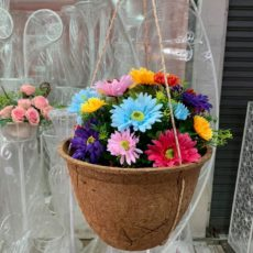 Biodegradable hanging baskets