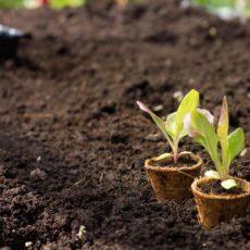 Coco coir seed starter pots