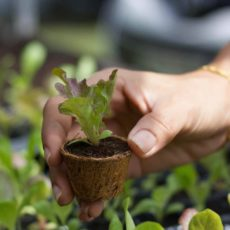 Biodegradable seed (starter) pots