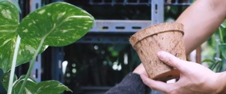 Biodegradable Pots Video