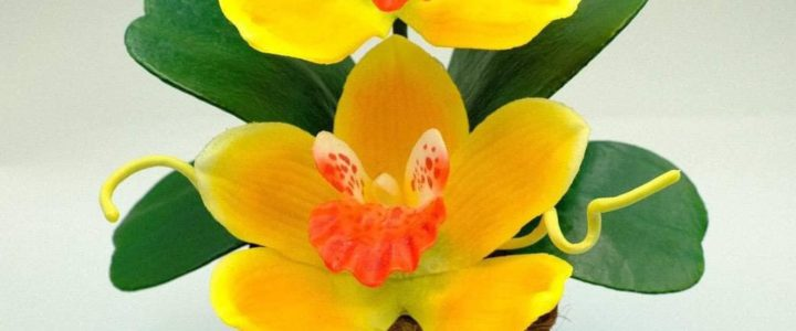 Succulent plant pots wholesale