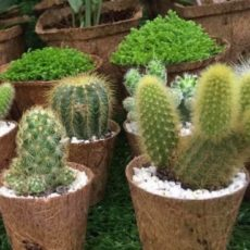 Succulents pot ideas